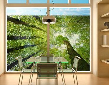 Fensterfolie - Sichtschutz Fenster Bäume des Lebens - Fensterbilder