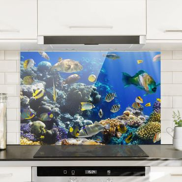 Spritzschutz Glas - Underwater Reef - Querformat - 3:2