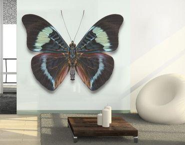Fensterfolie - Sichtschutz Fenster Lepidoptera - Fensterbilder
