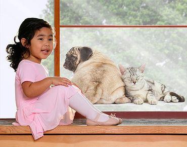 Fensterfolie - Sichtschutz Fenster Möpschen und Kätzchen - Fensterbilder