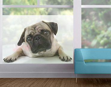 Fensterfolie - Sichtschutz Fenster Mops - Fensterbilder