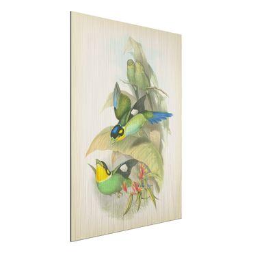 Aluminium Print gebürstet - Vintage Illustration Tropische Vögel - Hochformat 4:3