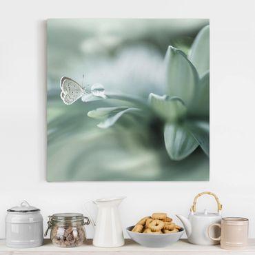 Leinwandbild - Schmetterling und Tautropfen in Pastellgrün - Quadrat 1:1