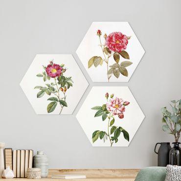 Hexagon Bild Forex 3-teilig - Pierre Joseph Redouté - Rosen