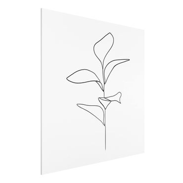 Forex Fine Art Print - Line Art Pflanze Blätter Schwarz Weiß - Quadrat 1:1