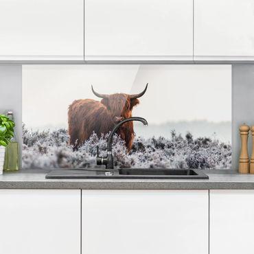 Spritzschutz Glas - Bison in den Highlands - Querformat - 2:1