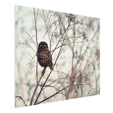 Forex Fine Art Print - Eule im Winter - Querformat 3:4