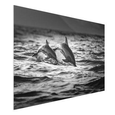 Forex Fine Art Print - Zwei springende Delfine - Querformat 2:3