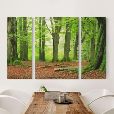 Leinwandbild 3-teilig - Mighty Beech Trees - Triptychon