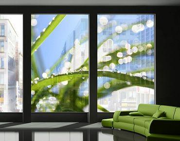Fensterfolie - XXL Fensterbild - Kiss of Sun - Fensterbilder Frühling - Fenster Sichtschutz