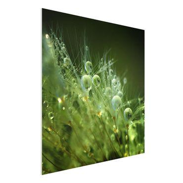 Forex Fine Art Print - Grüne Samen im Regen - Quadrat 1:1