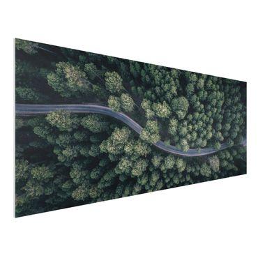 Forex Fine Art Print - Luftbild - Waldstraße von Oben - Panorama