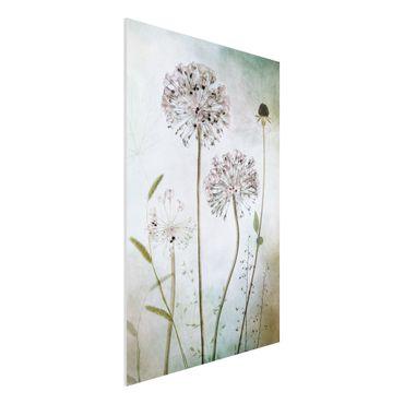 Forex Fine Art Print - Lauchblüten in Pastell - Hochformat 3:2