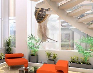 Fensterfolie - XXL Fensterbild Schneckentempo - Fenster Sichtschutz
