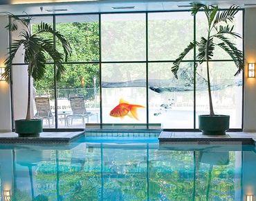 Fensterfolie - XXL Fensterbild Goldfisch - Fenster Sichtschutz