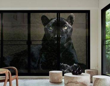 Fensterfolie - XXL Fensterbild Black Puma - Fenster Sichtschutz