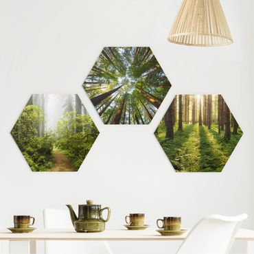 Hexagon Bild Forex 3-teilig - Wald Trio