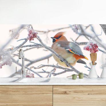 Küchenrückwand - Seidenschwanz im Baum