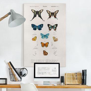 Leinwandbild - Vintage Lehrtafel Schmetterlinge I - Hochformat 3:2