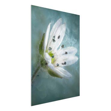Forex Fine Art Print - Weiße Blüte auf blau - Hochformat 4:3