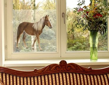 Fensterfolie - Sichtschutz Fenster Pony - Fensterbilder