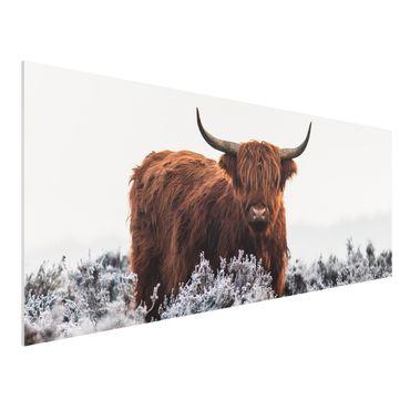 Forex Fine Art Print - Bison in den Highlands - Panorama