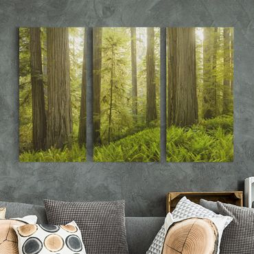Leinwandbild 3-teilig - Redwood State Park Waldblick - Hoch 1:2