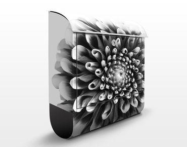 Briefkasten mit Zeitungsfach - Aster II - Blumen Schwarz-Weiß