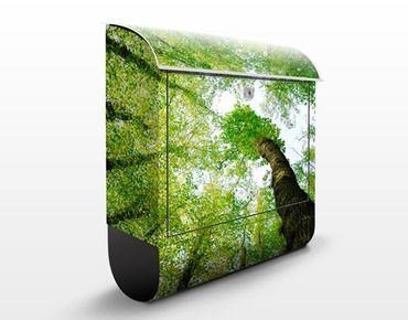 Briefkasten mit Zeitungsfach - Bäume des Lebens - Hausbriefkasten Grün