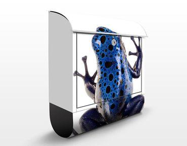 Briefkasten mit Zeitungsfach - No.282 Blue Frog 2 - Briefkasten mit Tiermotiv