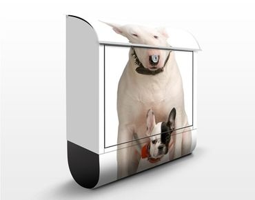 Briefkasten mit Zeitungsfach - Bull Terrier And Friend - Briefkasten mit Tiermotiv