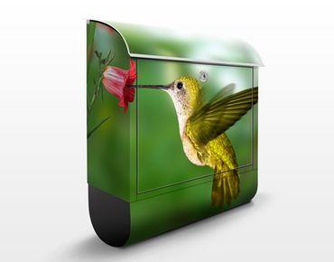 Briefkasten mit Zeitungsfach - Kolibri und Blüte - Briefkasten mit Tiermotiv