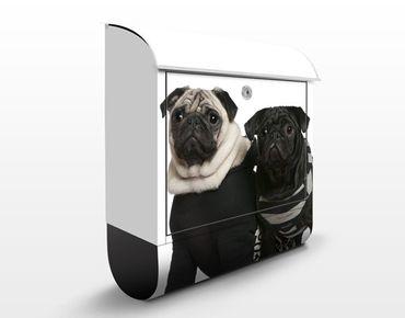 Briefkasten mit Zeitungsfach - Mops Fashion - Briefkasten mit Tiermotiv