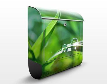 Briefkasten mit Zeitungsfach - Green Ambiance II - Blumen Grün