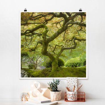 Poster - Grüner Japanischer Garten - Quadrat 1:1