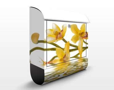 Briefkasten mit Zeitungsfach - Saffron Orchid Waters - Blumen Gelb-Weiß