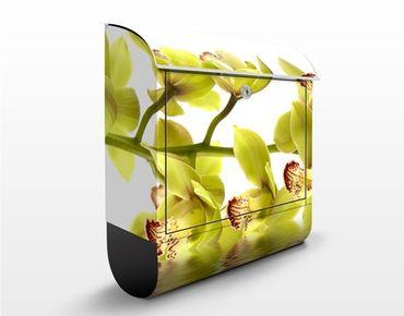 Briefkasten mit Zeitungsfach - Splendid Orchid Waters - Briefkasten Blumen