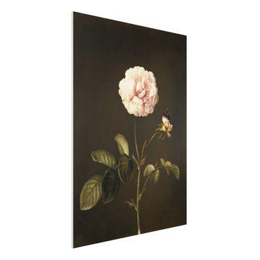Forex Fine Art Print - Barbara Regina Dietzsch - Essig-Rose mit Hummel - Hochformat 4:3