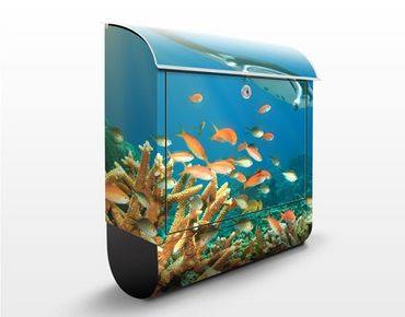 Briefkasten mit Zeitungsfach - Korallenriff - Briefkasten mit Tiermotiv