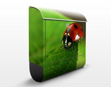 Briefkasten mit Zeitungsfach - Lady Bird - Briefkasten mit Tiermotiv