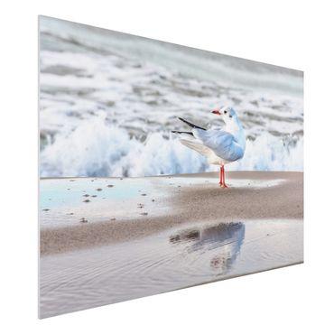 Forex Fine Art Print - Möwe am Strand vor Meer - Querformat 2:3