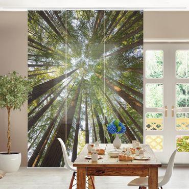 Schiebegardinen Set - Mammutbaum Baumkronen - Flächenvorhänge