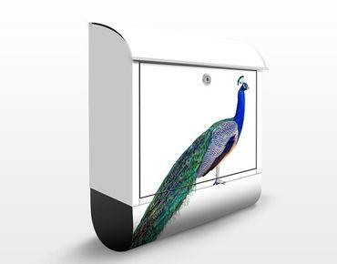Briefkasten mit Zeitungsfach - Pfau - Briefkasten mit Tiermotiv