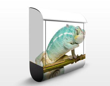 Briefkasten mit Zeitungsfach - Blaues Chamäleon - Briefkasten mit Tiermotiv