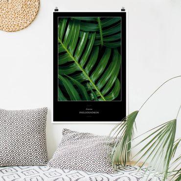 Poster - Tropische Blätter Philodendron - Hochformat 3:2