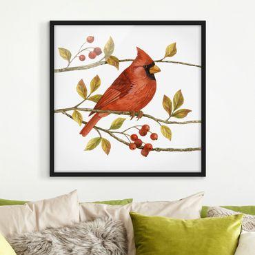 Bild mit Rahmen - Vögel und Beeren - Rotkardinal - Quadrat 1:1