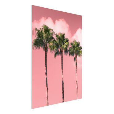 Forex Fine Art Print - Palmen vor Himmel Rosa - Hochformat 4:3