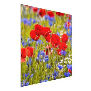 Forex Fine Art Print - Sommerwiese mit Mohn und Kornblumen - Quadrat 1:1