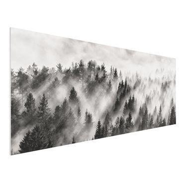 Forex Fine Art Print - Lichtstrahlen im Nadelwald - Panorama