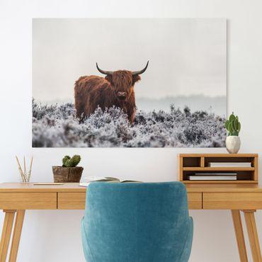 Leinwandbild - Bison in den Highlands - Querformat 2:3